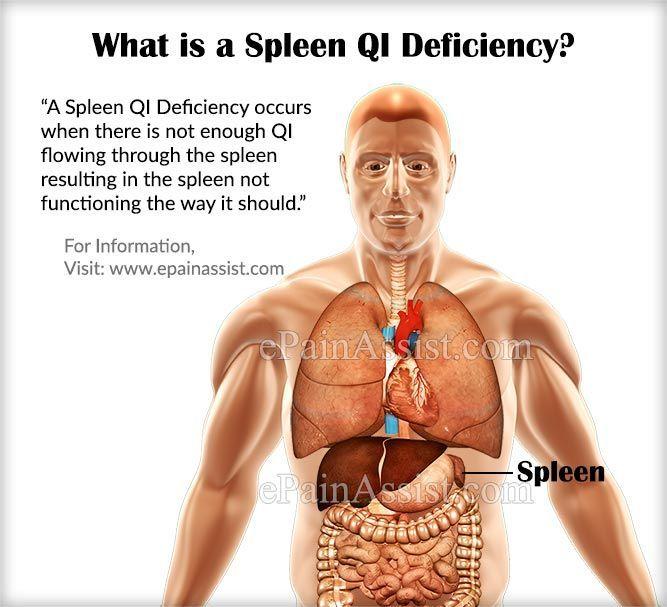 13 best spleen qi deficiency images on pinterest | acupuncture, Sphenoid