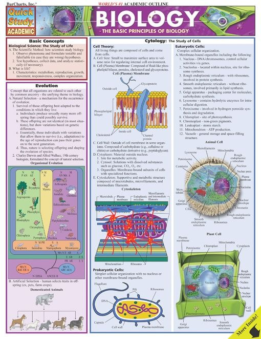 Eukaryotic Cells The A Level Biologist Manual Guide