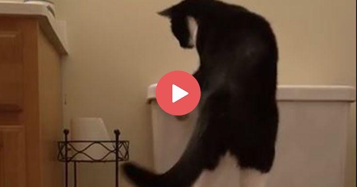 You won't believe what this smart cat can do!   https://blog.entirelypets.com/pet-videos/cat-flushes-toilet?utm_source=twitter&utm_medium=web&utm_campaign=eptwpostvvnew#utm_sguid=148622,04003beb-0101-c367-6ed2-bdb1ed794331