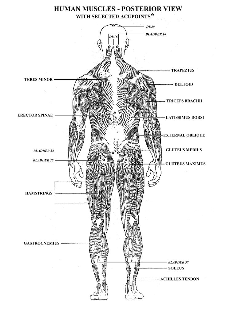 worksheets muscles human body - google search | anatomy, Muscles