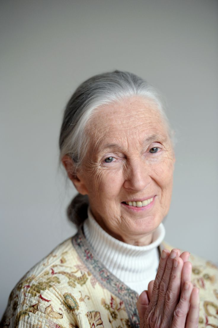 jane goodall 2017-2-1 reporting to the director, programs, the program assistant provides operational and administrative support for africa programs and jane goodall's roots & shoots the program assistant will also assist with identifying opportunities to expand the institute's work in community-centred conservation.