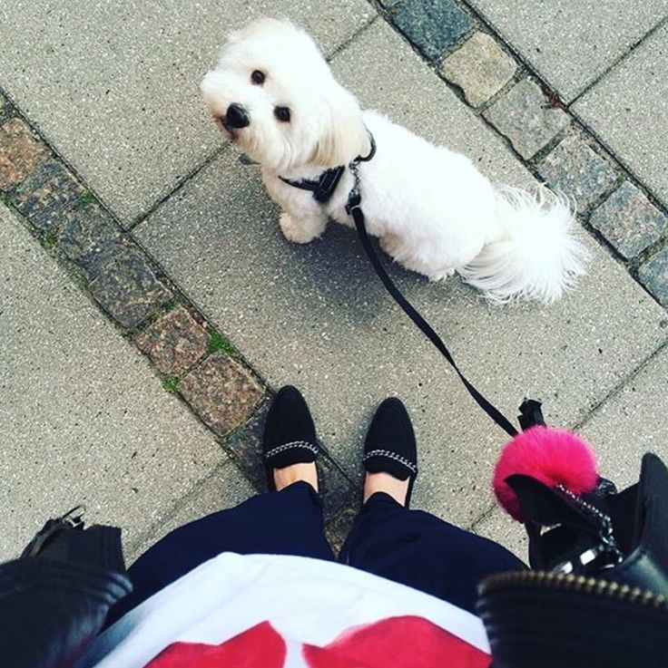 The Leonora Loafers in soft suede is perfect for at doggy walk!