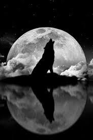 Resultado de imagem para desenhos de lobo uivando pra lua