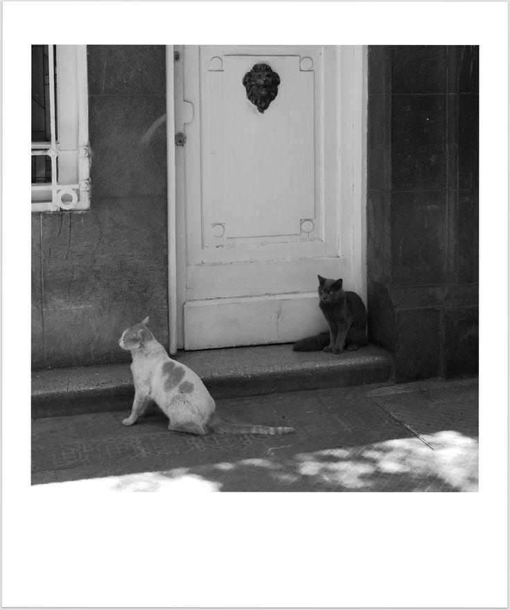 #Cats #CamiloLastarria