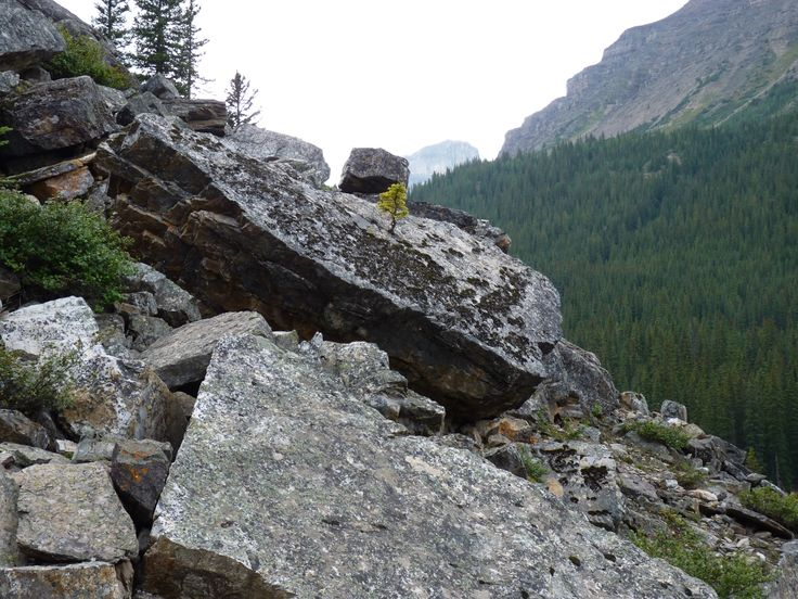 Nature finds his way... Canadian Rockies.