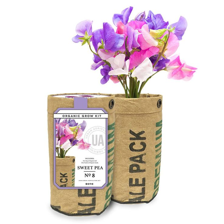 Sweet Pea Grow Kit by the Urban Agriculture Company
