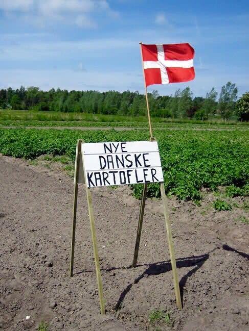 New Danish potatoes - you can buy them directly from the farmer.