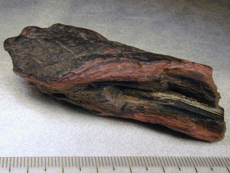 Lignito