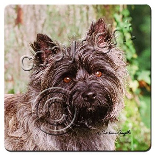 Cairn Terrier Gray Coaster Set
