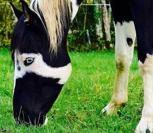 black a horse has - photo #33