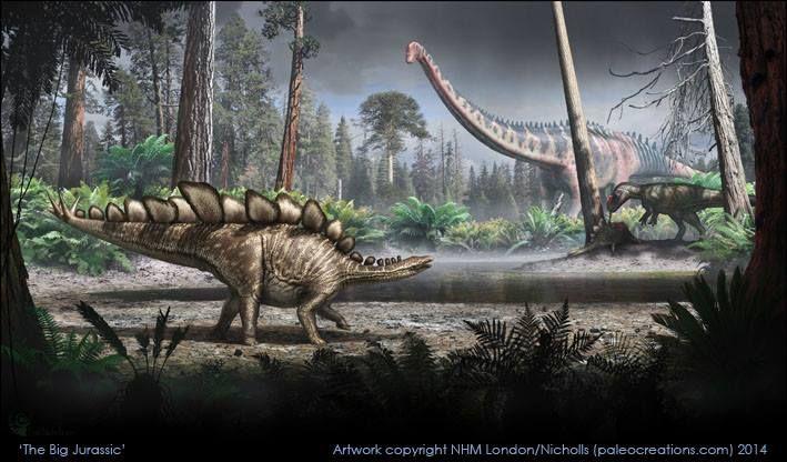 DinoAstur - » Un esqueleto de Stegosaurus en el Museo de Historia Natural de Londres