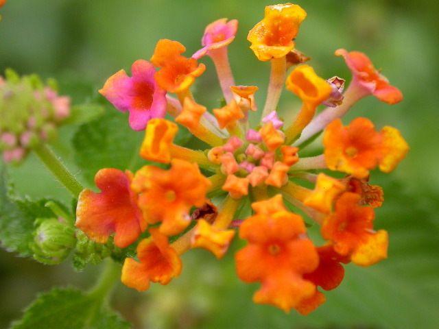 76 best nature - flowers - wildflowers