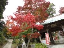 東山寺の紅葉  約1200年前。平安時代初期、弘法大師が、伊弉諾神宮の鎮護と庶民信仰の中心として開山された。