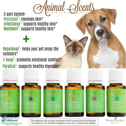 Animal Scents