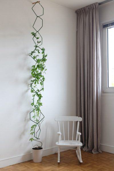Love the indoor vine trellis structure to decorate a wall @istandarddesign