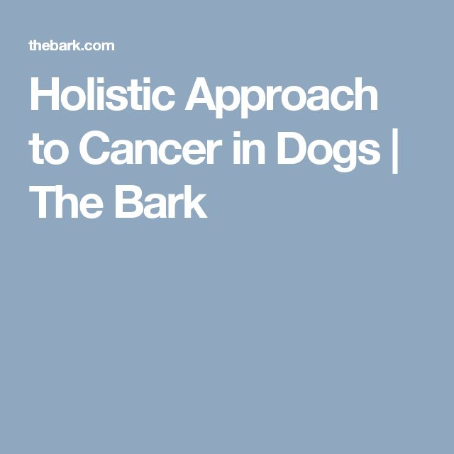 Holistic Approach to Cancer in Dogs | The Bark