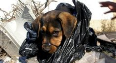 Justice For Campa! Muzzled, Hog Tied And Tossed in A Garbage Bag To Perish!