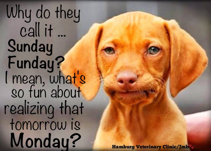 Dog Cute: Mondays Are Not Always Easy, Are