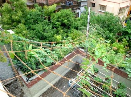16 best images about rooftop garden india on pinterest for Terrace vegetable garden india