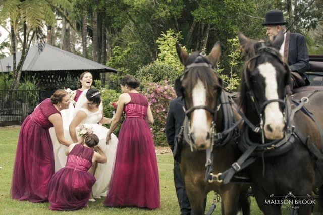 Cassie & Mitch – Weddings at Tiffanys Maleny » aaphoto.com.au
