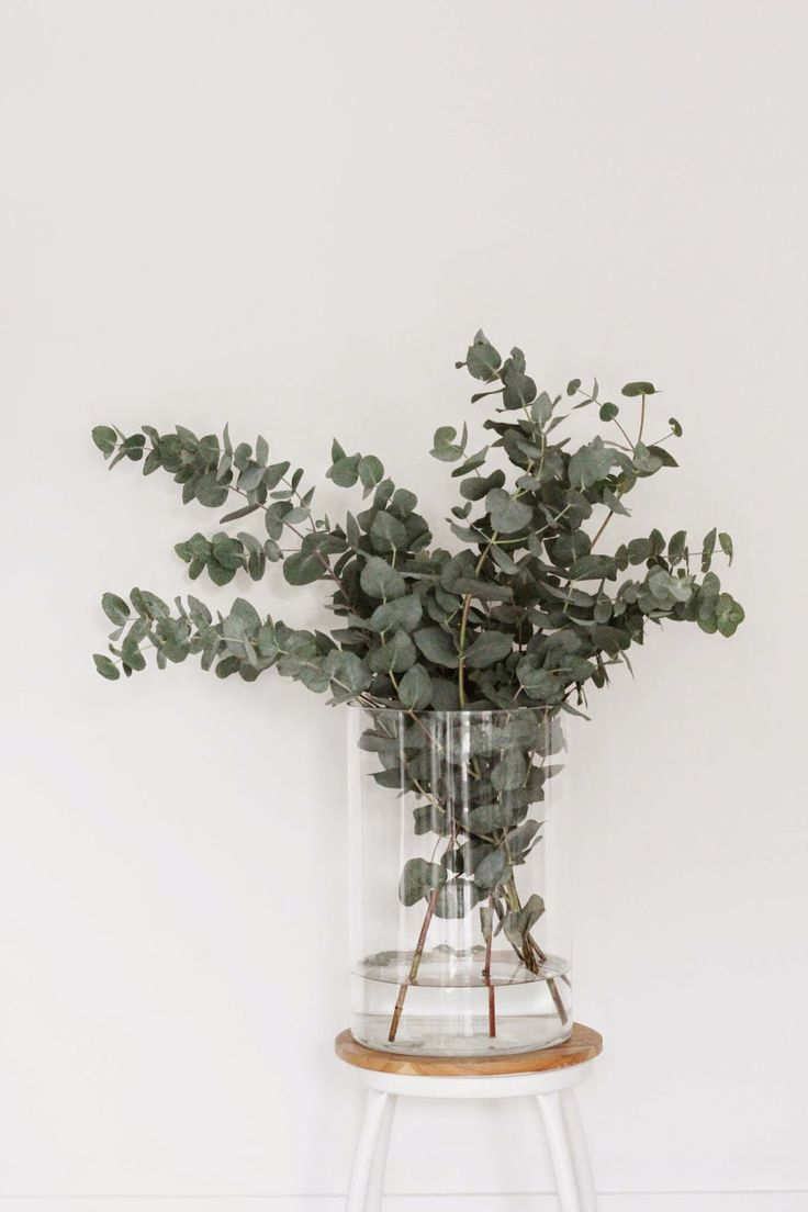 Silver Dollar Eucalyptus in Glass Vase