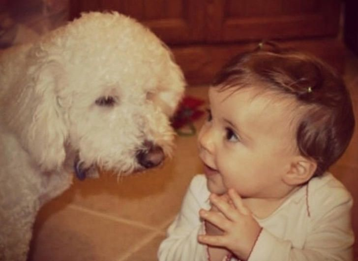 Heartwarming Moments Of Babies And Dogs Meeting For The First Time – Positive Daily - Page 6