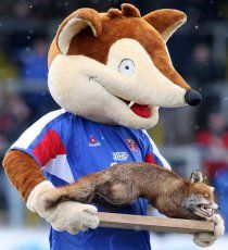 Olga the Fox - Carlisle United