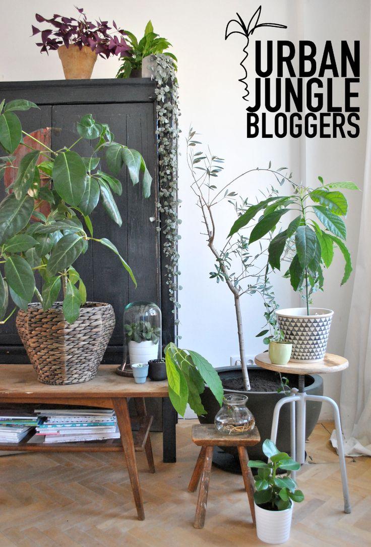 Les 87 meilleures images du tableau plants sur pinterest for Fausse plante verte interieur