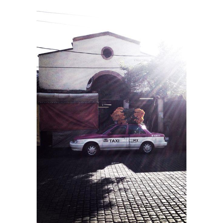 Taxi + cempaxochitl