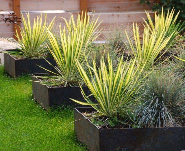 graminées-jardinières-style-minimaslite-jardin-pelouse