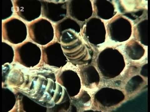 Kdopak by se včely bál - YouTube