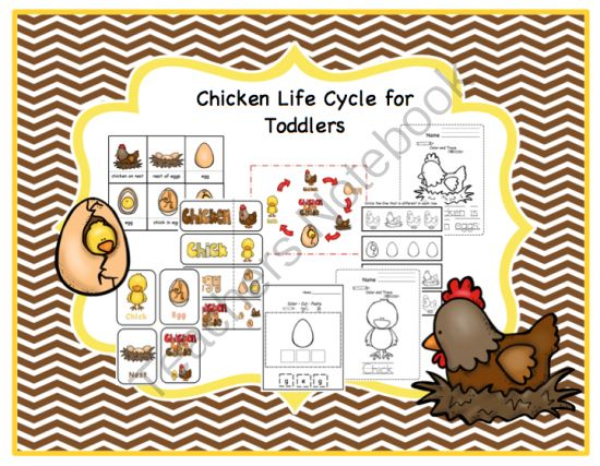 chicken life cycle printable for toddlers from preschool