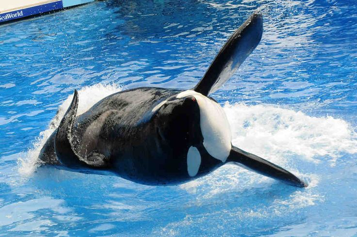 SeaWorld: Remember When We Said That Blackfish Movie Didn't Hurt Us? Well, Never Mind.