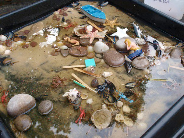 have an outside sand and water table mixed together and fill it with things from the local beach