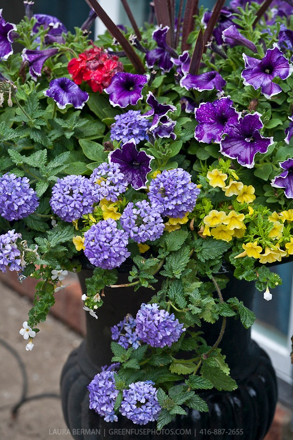 Potted Garden Flowers 86 best flower containers for morrisville, vt images on pinterest