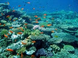 The red sea - amazing snorklingCoral Reef, Photos Gallery, Favourite Places, Demetrios Barros, Coral Red, Red Seapretti, Nature Beautiful, Solomon Islands, Coral Sea