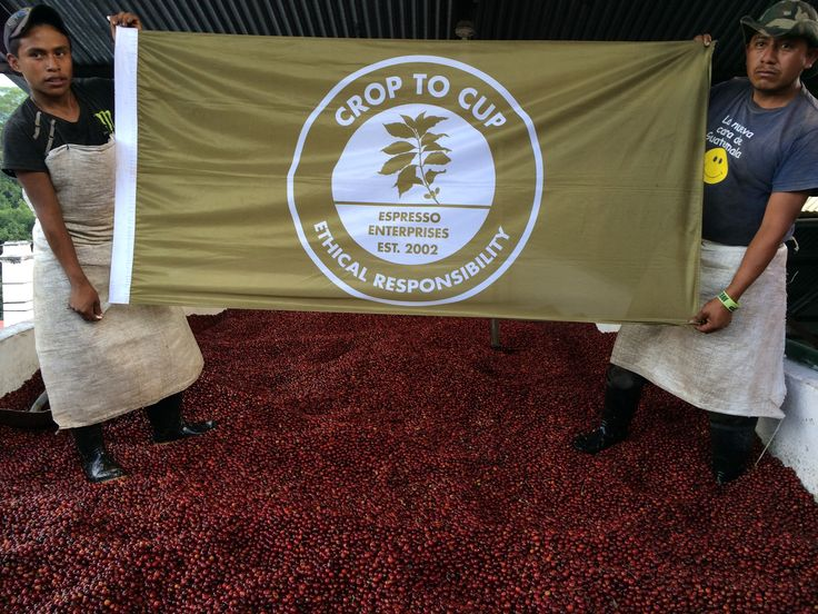 Costa Rica crop to cup