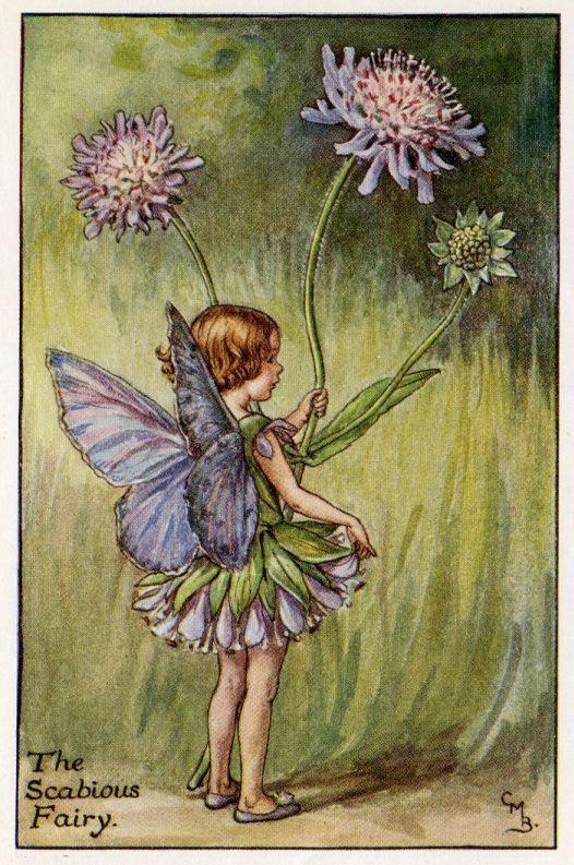 Scabious Flower Fairy Vintage Print, c.1927 Cicely Mary Barker-boekillustratie plaat