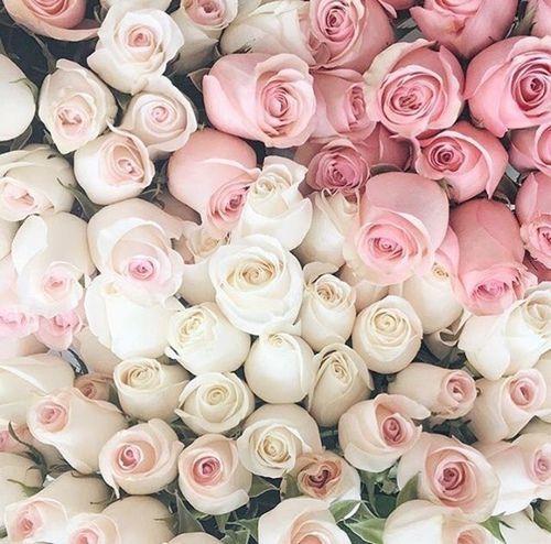 @blusheddarling - White and pink roses
