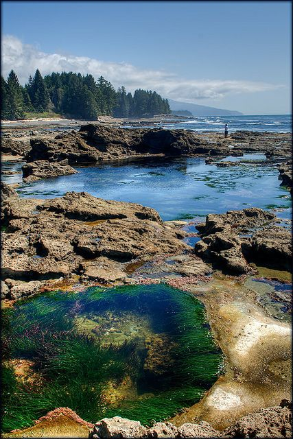 A moonscape of tidal pools revealed at low tide at Botanical Beach, on the west coast of Vancouver Island