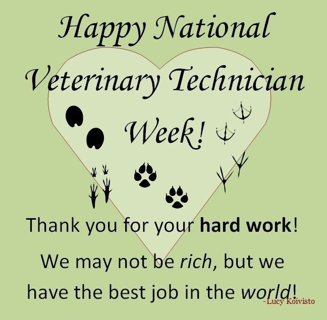 Happy National Veterinary Technician/Technologist Week! Educate your friends and clients about what we do. Educate people that non licensed staff actually are assistants by law, and licensed vet techs are the only vet techs out there. Be proud it the hard work you've gone through to be licensed! Also, you can turn in staff and employers to the state board for using the name Veterinary Technician for non-licensed personnel :)