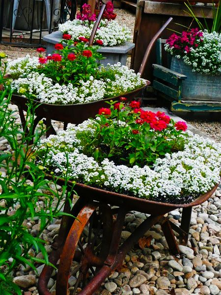Wheelbarrow planter #gardening #upcycling NOT in a wheel barrel, but so pretty in a planter