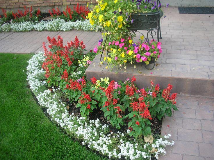 Salvia And Alyssum Exterior Yard And Garden 400 x 300