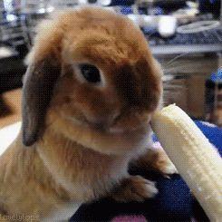 4. Cute Bunny eating banana