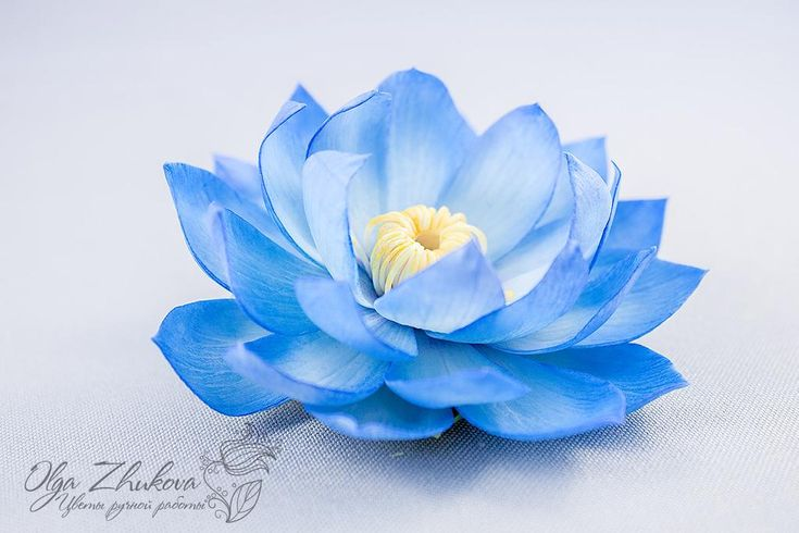 Hair clip with a flower of blue lotus by polyflowers in 2020 | Flower art, Blue lotus, Blue lotus flower