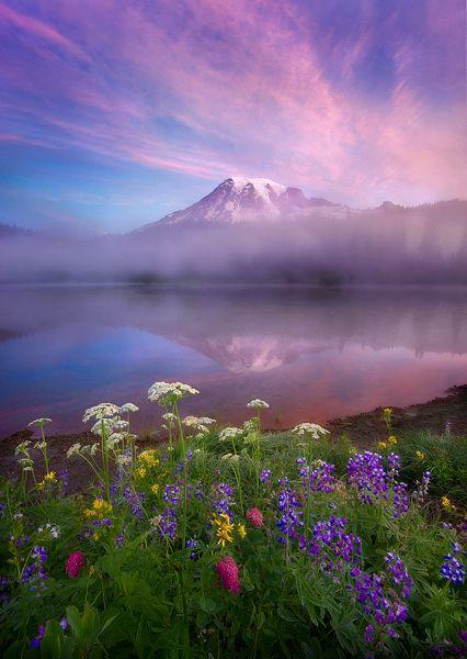 Beauty - Mount Rainier National Park. by Mark Adamus