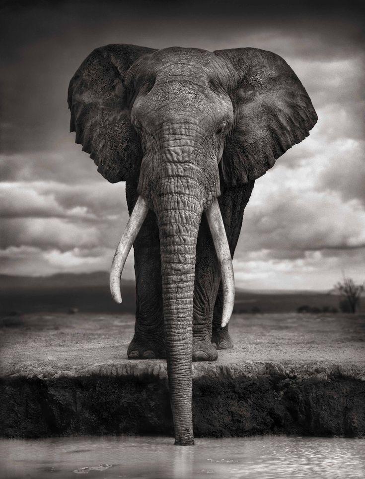 NICK BRANDT (B. 1964) African wildlife photography