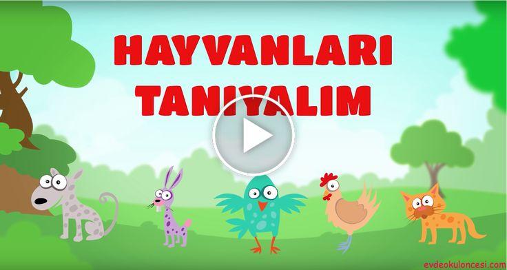 Hayvanları Öğreniyoruz - Hayvanlar ve Sesleri - Çocuklar İçin Eğitici Eğlenceli Türkçe Çizgi Film