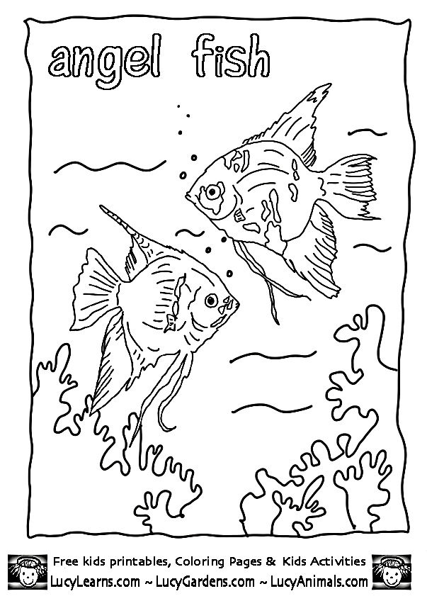 29 best Animal Coloring images on Pinterest Coloring sheets