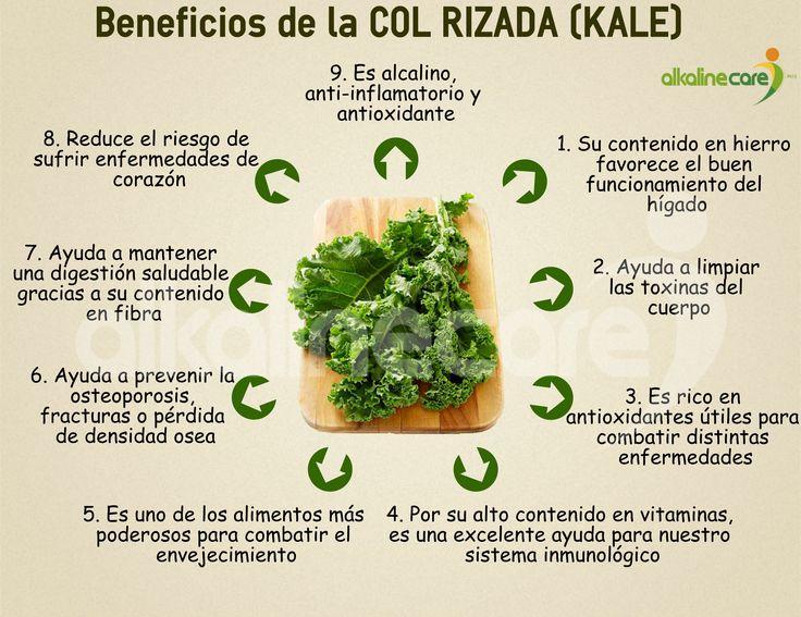Beneficios de la Kale                                                       …